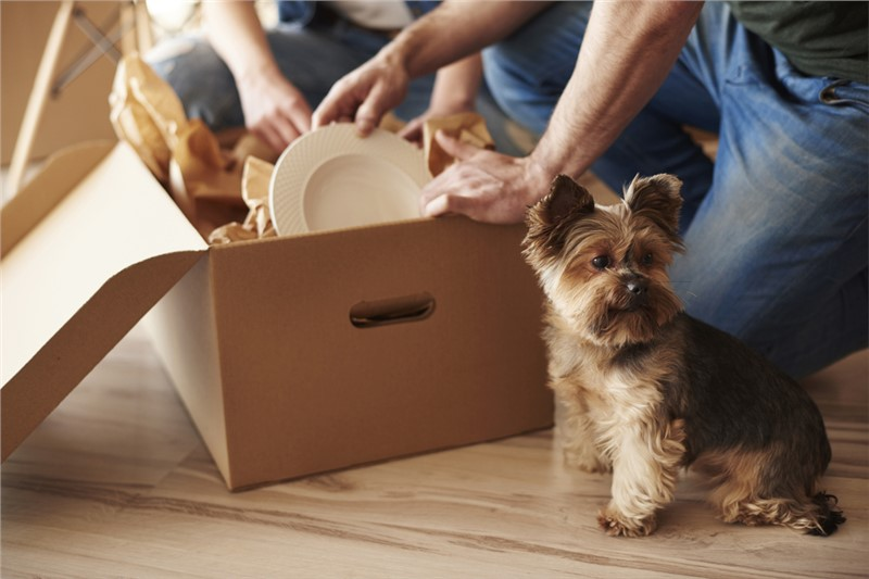 5 Tips to Make This Year's Big Move a Little Easier