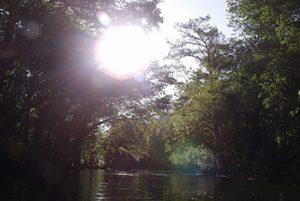 ocala-national-forest