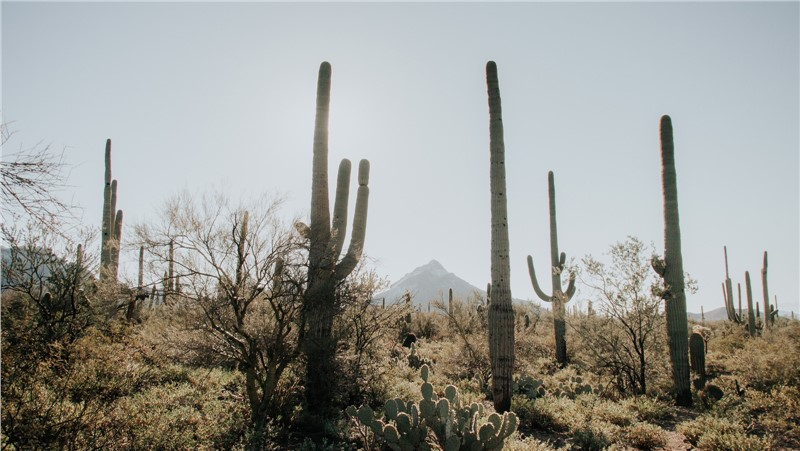 5 Reasons to Move to Phoenix