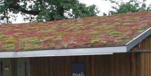 Vegetation on Roof