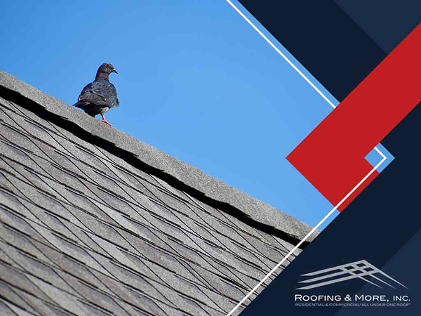 Factors That Affect Your Roof's Long-Term Performance