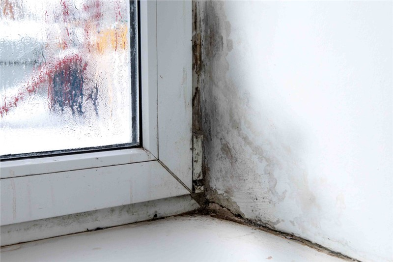 How to Prevent Mold Growth on Windowsills