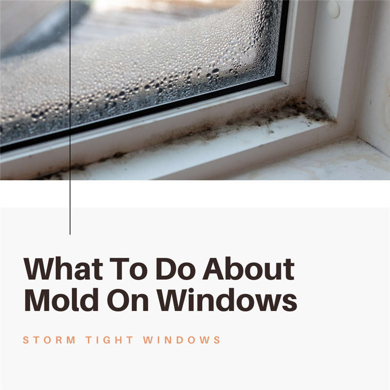 What To Do About Mold On Windows