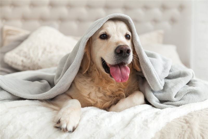 How to Keep Kids & Pets Warm in an Outage Before Your Emergency Furnace Repair